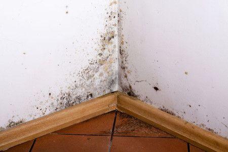 Pleśń pojawia się zwykle w narożach, na połączeniu ścian lub ścian i sufitu